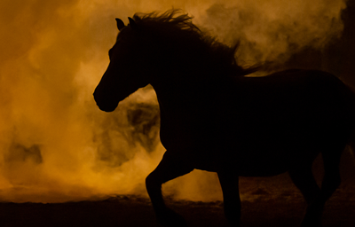 Silhouette of horse in orange smokey air