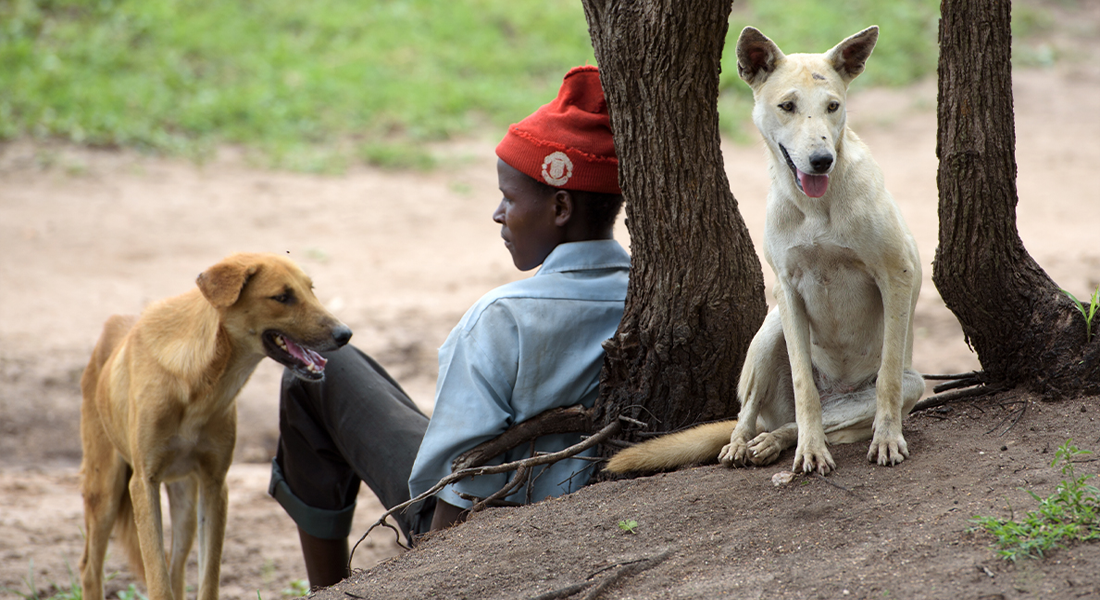 Young man sitting outside under a tree with 2 dogs
