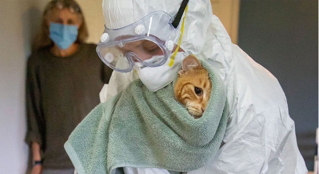 Dr. Katie Kuehl, a veterinarian and clinical assistant professor, in PPE and holding a cat.