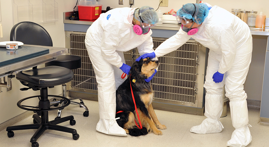 Dog being evaluated in exam room.